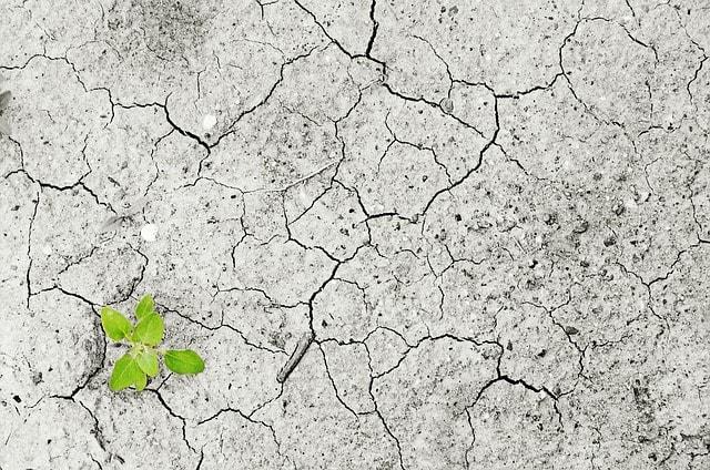El fenómeno de la Resiliencia